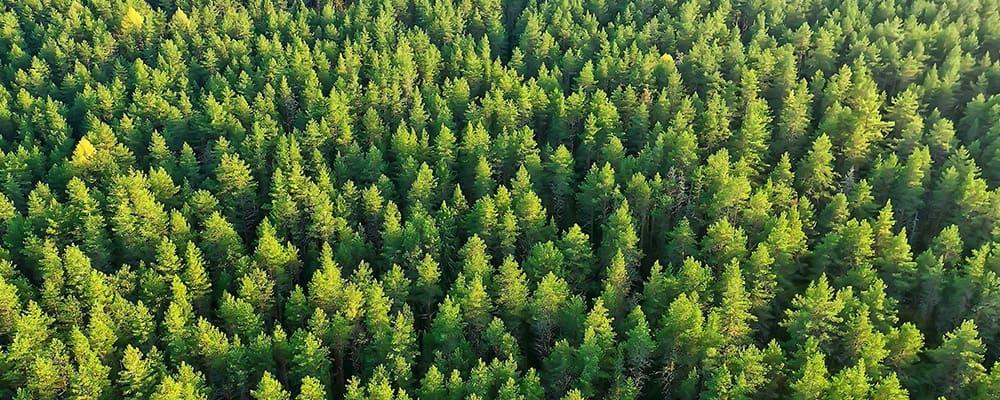 Der Wald – unsere Chance für Österreich